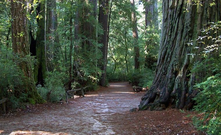 Bigbasinredwoods