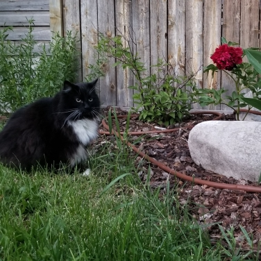 Los gatos también asistieron a la peli
